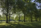 Morning Sunlight  St James Park  London  England  United Kingdom