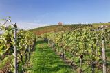 Cottage in Vineyards in Autumn  Uhlbach  Baden Wurttemberg  Germany  Europe
