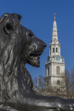 Lion at Foot of Nelson's Column and St Martin-In-The-Fields Church