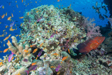 Colourful Reef Fish and Leopard Coral Grouper  Queensland  Australia