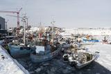 Ilulissat Harbour  Greenland  Denmark  Polar Regions