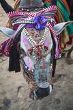 Decorated Cow  Goa  India  Asia