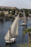 Feluccas Sailing on the River Nile  Aswan  Egypt  North Africa  Africa