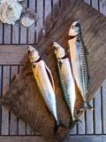 Mackerel Fish  Grebbestad  Bohuslan Region  West Coast  Sweden  Scandinavia  Europe