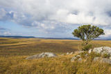 Overlook over the Highlands of the Nyika National Park  Malawi  Africa