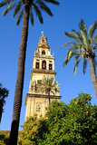 Patio De Los Naranjos  Mezquita Cathedral  Cordoba  Andalucia  Spain