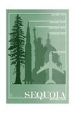 Sequoia National Park - Redwood Relative Sizes