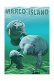 Marco Island - Manatees