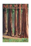 Muir Woods National Monument  California - Deer and Grove
