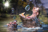Hippos and Bubbles