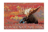 Glacier National Park - Bull Moose and Red Flowers
