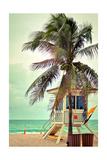 Lifeguard Shack and Palm