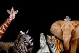 A Group of Animals are Together on A Black Background with Text Area Animals Range from an Elephan