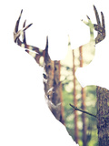 Whitetail Buck in the forest or Vice Versa Papier Photo