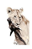 The Kill A Lioness with a Blue Wildebeest Calf  Serengeti National Park  East Africa