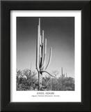 Saguaro National Monument Arizona