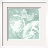Spa Jellyfish V
