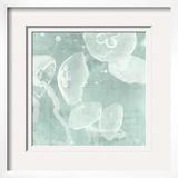 Spa Jellyfish IV