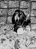 A Chimpanzee in Paradise