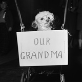 Grandma the Dog at Annual Dogs Christmas Party in Bristol  1958