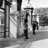 Grenadier Guardsman at Buckingham Palace