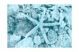 East Coast Shells II Reproduction d'art par Jairo Rodriguez
