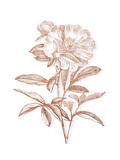 Etched Metallic Floral I