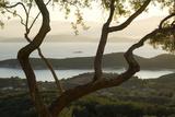 Islands in the Adriatic Sea  Corfu Through Twisted Treetrunks