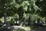 Trees and Graves at Brompton Cemetery  Kensington  London