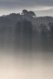 Misty Morning  River Teign  Devon  England