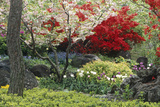 Spring Garden with Red Leaves on Tree and Blossom