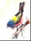 Bunting Bird