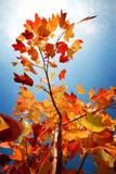 Autumn Serenade Papier Photo par Philippe Sainte-Laudy