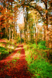 Take a Path in Autumn Papier Photo par Philippe Sainte-Laudy