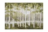 Spring Birch Tree Grove