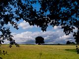 Solo Tree Framed
