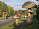Kew Fungi