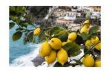 Amalfi Coast Citrus Fruit  Positano  Italy