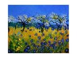 Blue Cornflowers 545130
