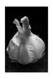 Garlic Bulb BW