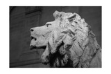 Lion of the Art Institute Chicago BW
