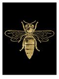 Bumblebee Golden Black