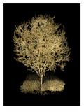 Olive Tree Golden Black