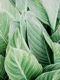 Tropica Leaves Reproduction d'art par LILA X LOLA