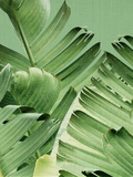 Tropical Leaves 2 Reproduction d'art par LILA X LOLA