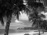 Palms on Shore  Cayman Kai Near Rum Point  Grand Cayman  Cayman Islands  West Indies
