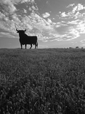 Giant Bull  Toros de Osborne  Andalucia  Spain