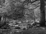 Afon Artro Passing Through Natural Oak Wood  Llanbedr  Gwynedd  Wales  United Kingdom  Europe