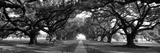 Louisiana, New Orleans, Brick Path Through Alley of Oak Trees Papier Photo par Panoramic Images