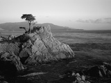 Lone Cypress Tree on Rocky Outcrop at Dusk  Carmel  California  USA